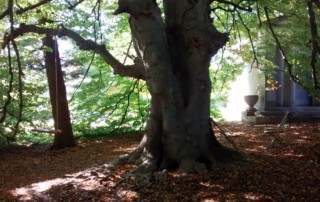23-The Story Tree-Rolnick