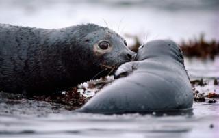 arctic-exxon-seal_natgeo-1066